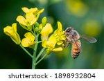 image of bee or honeybee on...   Shutterstock . vector #1898932804