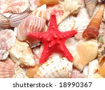 a red starfish and seashell - stock photo