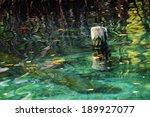 Wooden Pole Dock Green Lagoon ...