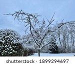 Small Barren Tree In Winter...
