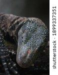 A Close Up Of A Crocodile...
