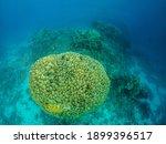 Big Green Bush Underwater Of...