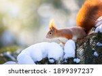 Beautiful Squirrel On A Snowy...