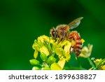 image of bee or honeybee on...   Shutterstock . vector #1899638827