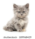 Stock photo small gray kitten on a white background 189968429