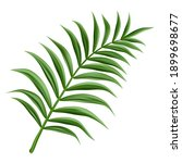 3d realistic vector palm branch ... | Shutterstock .eps vector #1899698677