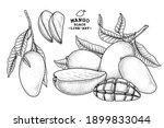 set of mango fruit hand drawn... | Shutterstock .eps vector #1899833044