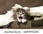 Stock photo good morning adorable maine coon kitten 189995204