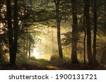 Path Through The Autumn Forest...