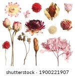 set with beautiful dry flowers... | Shutterstock . vector #1900221907