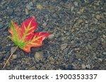 Multi Coloured Leaf Floating In ...