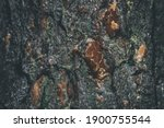 Pine Bark Background. Bark Of A ...