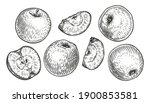 apple fruit set. engraved... | Shutterstock .eps vector #1900853581
