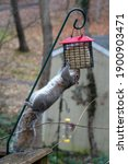 Squirrel Hanging Upside Down...