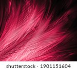 Beautiful abstract red feathers ...