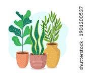 houseplants with long stem.... | Shutterstock .eps vector #1901200537