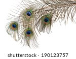 Beautiful Feather Of Peacock...