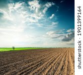 Black Agriculture Field And...