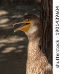 Great Cormorant Stands On A Log