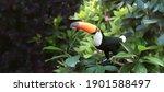 horizontal banner with...   Shutterstock . vector #1901588497