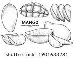 set of mango fruit hand drawn... | Shutterstock .eps vector #1901633281