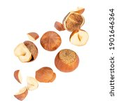 Falling Hazelnuts Isolated  On...