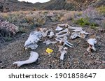 Horse Remains After Attack By...