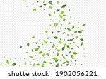 forest greenery blur vector... | Shutterstock .eps vector #1902056221