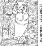 vector hand drawn owl color... | Shutterstock .eps vector #1902188734