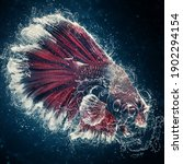 Art Water Color Of Cupang Or...