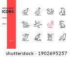 bird species   modern line...   Shutterstock .eps vector #1902695257