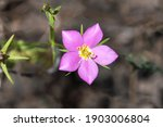 Meadow Pink  Also Known As...