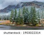 Autumn Shot Of Pine Trees ...