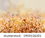 abstract oil painting of... | Shutterstock . vector #1903126201