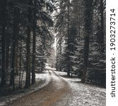 Snowy Road In The Forest...