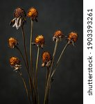 Dead Stems And Seedheads Of...