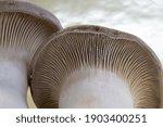 King Oyster Mushrooms...