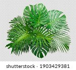 Bush green monstera leaf...