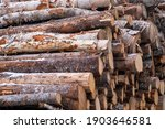A Cord Of Cut Birch Wood For...