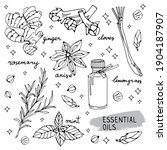 Essential Oils Components...
