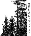 silhouettes of fir trees... | Shutterstock .eps vector #1904259904