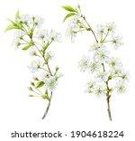 Delicate White Spring Cherry...