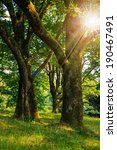 forest glade in the cool shade of three oak trees on a hot summer day in sun rays - stock photo