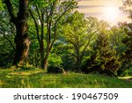 forest glade in the cool shade of three oak trees on a hot summer evening at sunset - stock photo
