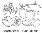 set of hachiya persimmon fruit... | Shutterstock .eps vector #1904881504
