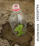 pepper seedling growing in... | Shutterstock . vector #190539794
