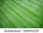 Closeup Water Drop On Green...