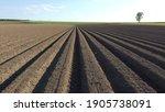 Potato Plot Photographed With A ...