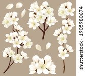set of branches of blooming... | Shutterstock .eps vector #1905980674
