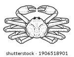 snow crab. vector line art... | Shutterstock .eps vector #1906518901
